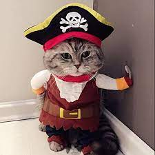 Amazon.com : Idepet New Funny Pet Clothes Pirate Dog Cat Costume Suit  Corsair Dressing up Party Apparel Clothing for Cat Dog Plus Hat (M) : Pet  Supplies